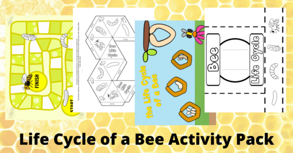 Bee Life Cycle Printable