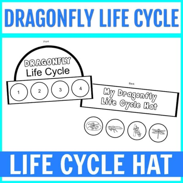 Dragonfly Life Cycle for Kids