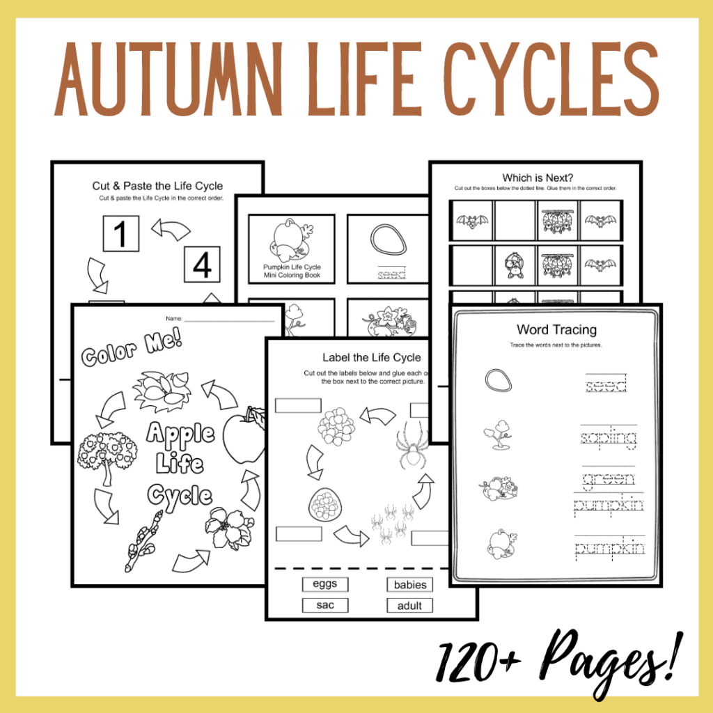 Autumn Life Cycle Worksheets