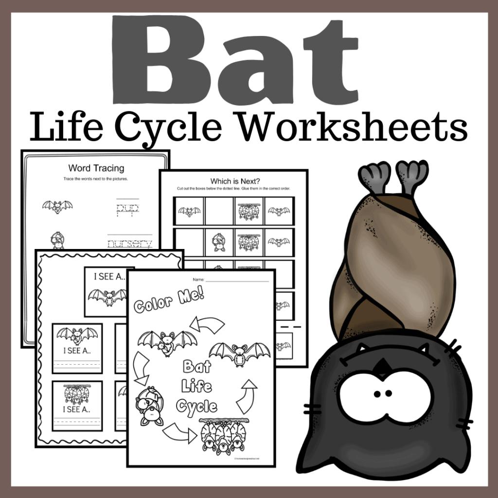 Bat Life Cycle Worksheets