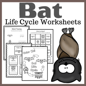 Bat Life Cycle Worksheets