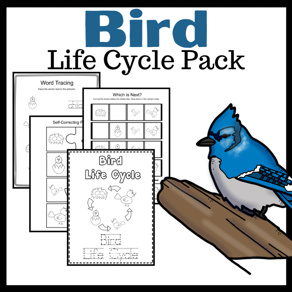 Life Cycle of a Bird for Kids