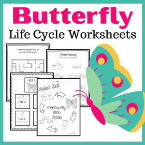 Life Cycle of a Butterfly for Kids