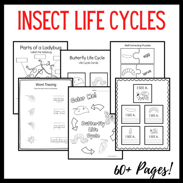 Life Cycle of Insects for Preschool