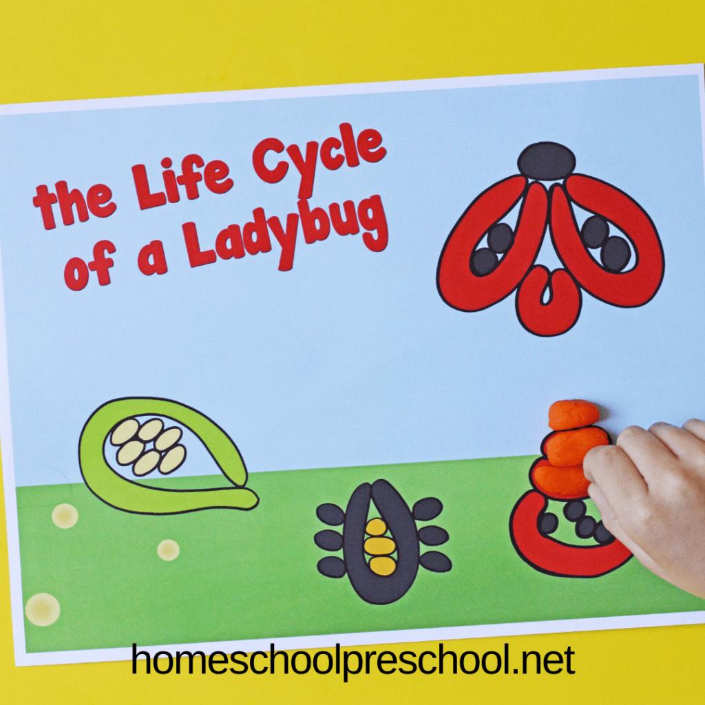Life Cycle Playdough Mats