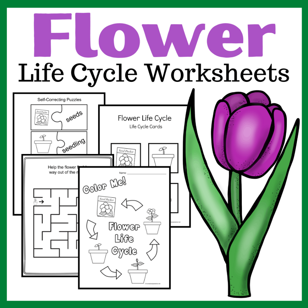 Life Cycle of a Flower for Kids