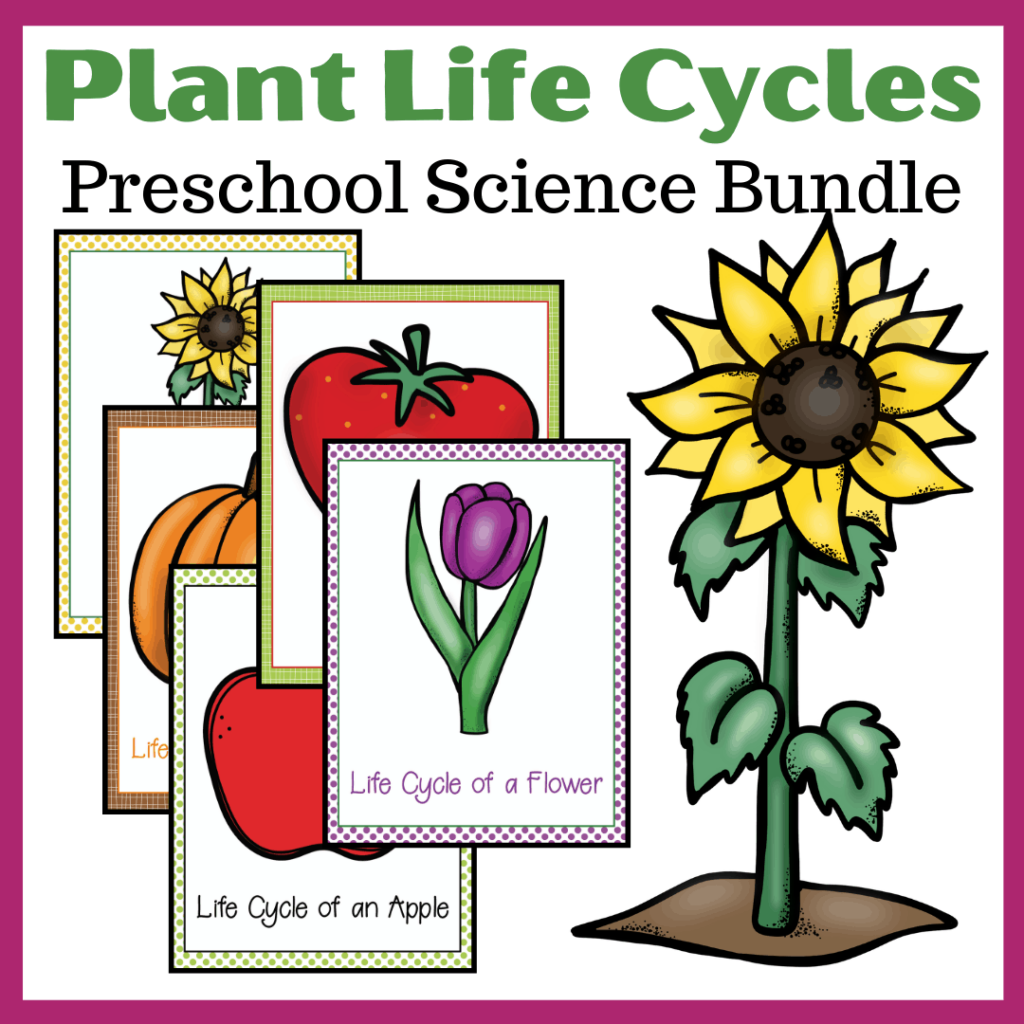 Life Cycle of Plants for Kids