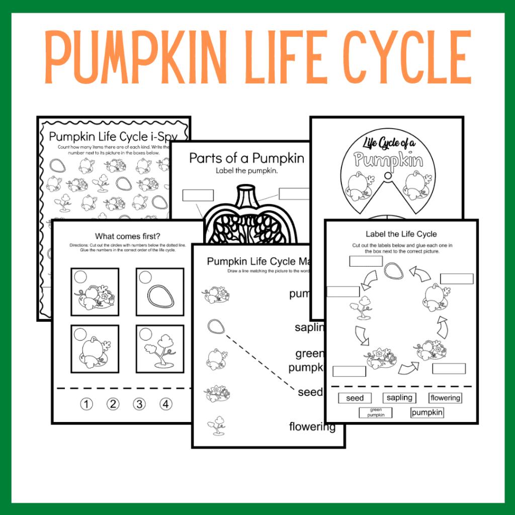 Discounted Pumpkin Bundle