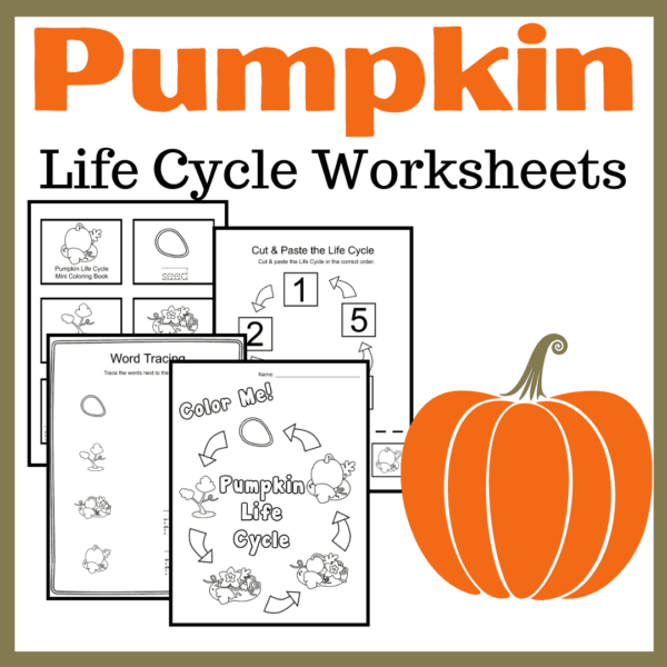 Discounted Pumpkin Life Cycle