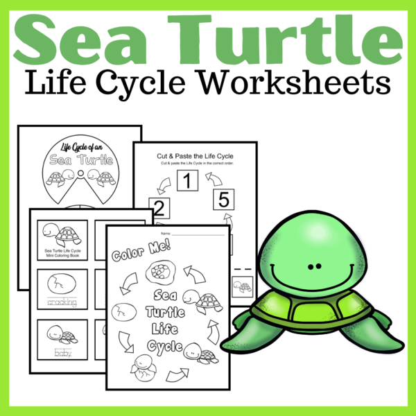 Sea Turtle Life Cycle for Kids