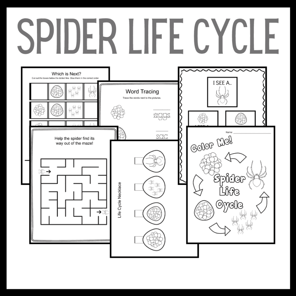 Spider Life Cycle for Kids