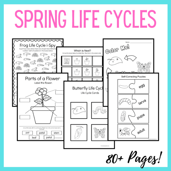 Spring Life Cycle Worksheets
