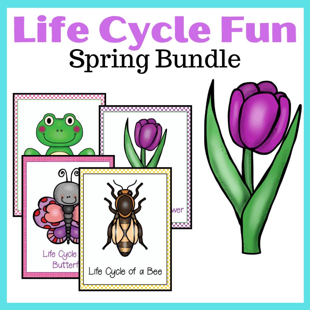 Spring Life Cycle Worksheets