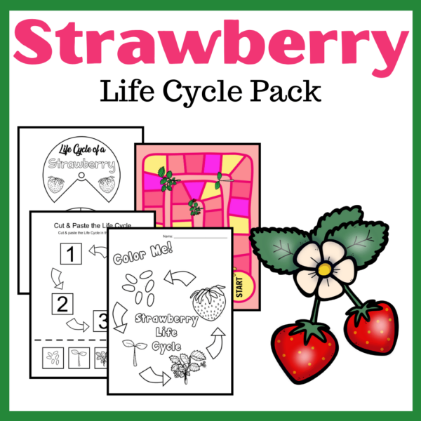 Strawberry Life Cycle