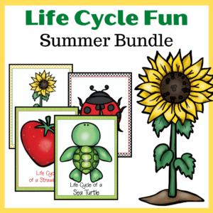 Summer Life Cycle Worksheets