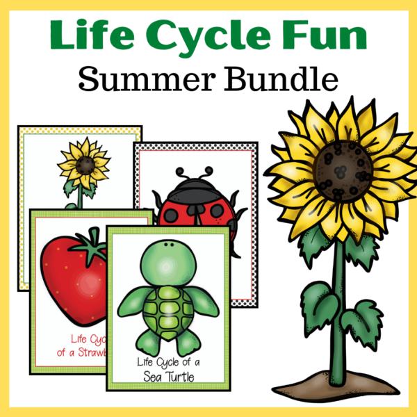 Summer Life Cycle Worksheets