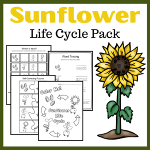 Life Cycle of a Sunflower Worksheets